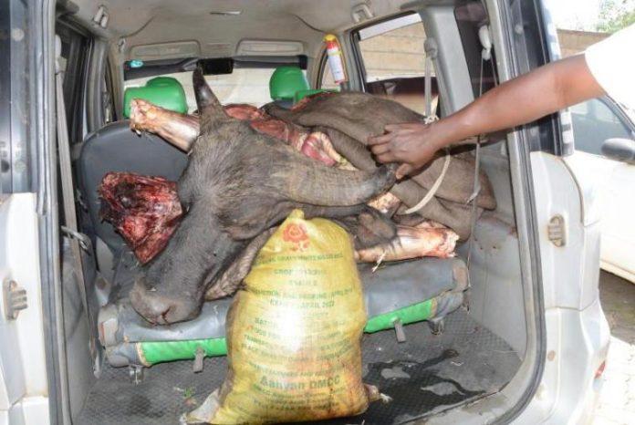 200Kgs Of Buffalo Meat Nabbed On Transit To Burma Market, Nairobi