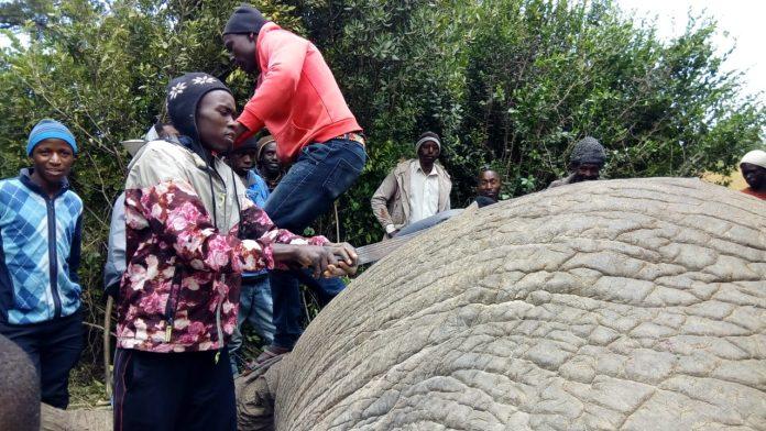 Kieni residents scramble for dead elephant meat, sends away KWS officers